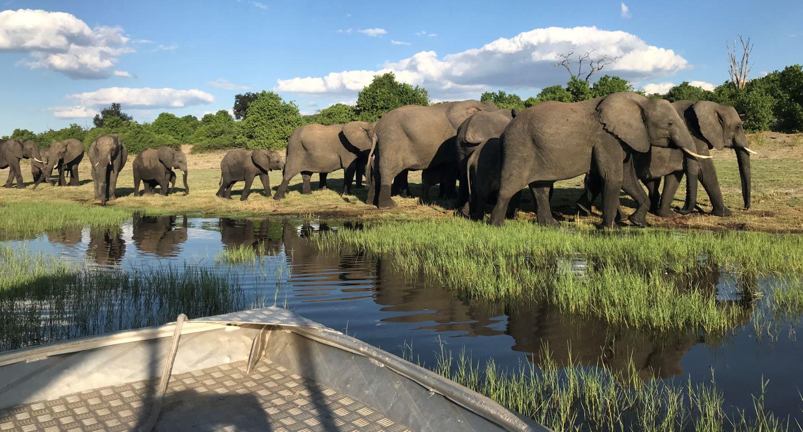 Chobe River Front